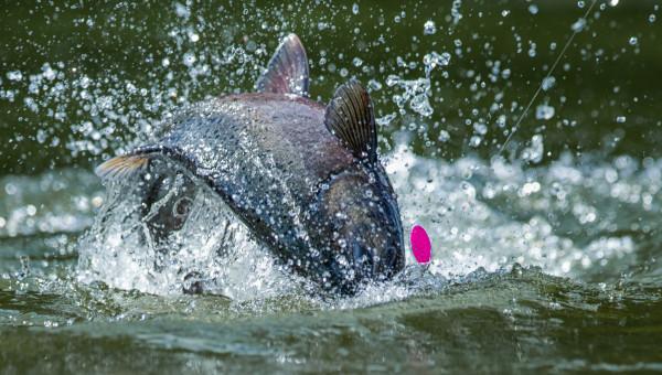 A Deeper Look at Fishing in Alaska