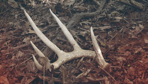 Shed Hunting 101: How to Find Better Sheds & Scout Like a Pro